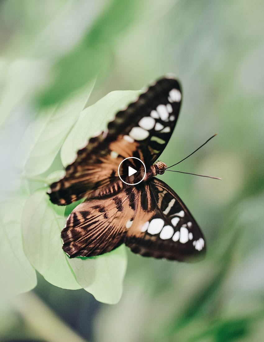 Homepage-Butterflies