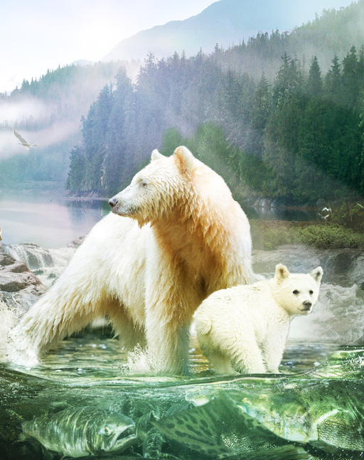 Journey to a land of grizzlies, coastal wolves, sea otters, humpbacks and the fabled all-white Spirit Bear.