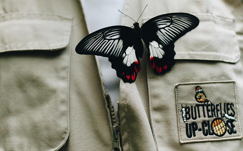 ButterfliesUpClose-Carousel-03