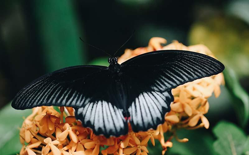 ButterfliesUpClose-Carousel-11